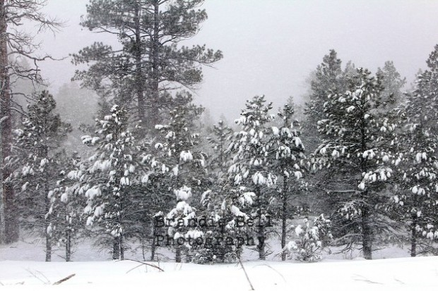 A Snowy Ride