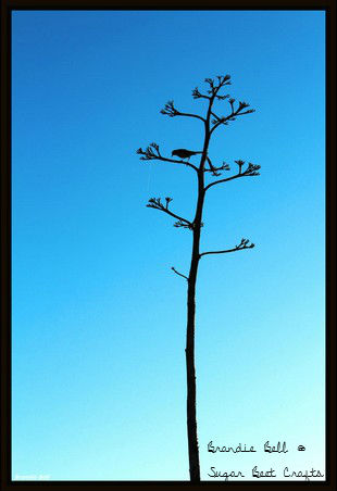 Photo Wednesday - A bird in tree