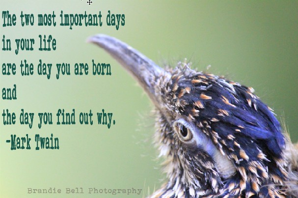 The Two Most Important Days in Your Life are the day you were born and the day you find out why. -Mark Twain